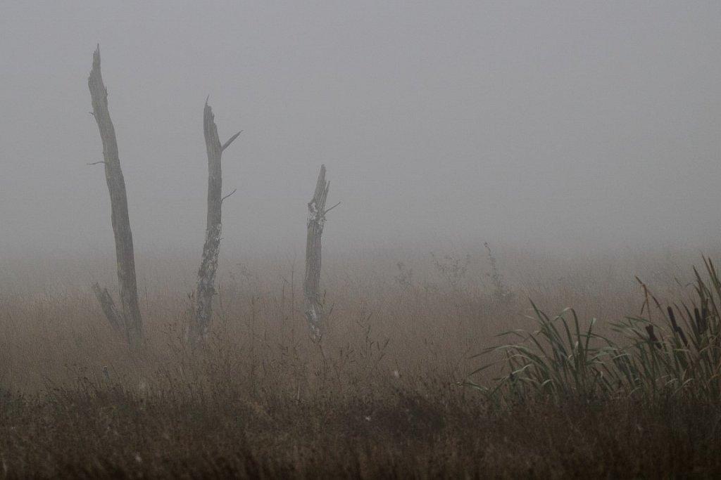 Nebel im Hiller Moor