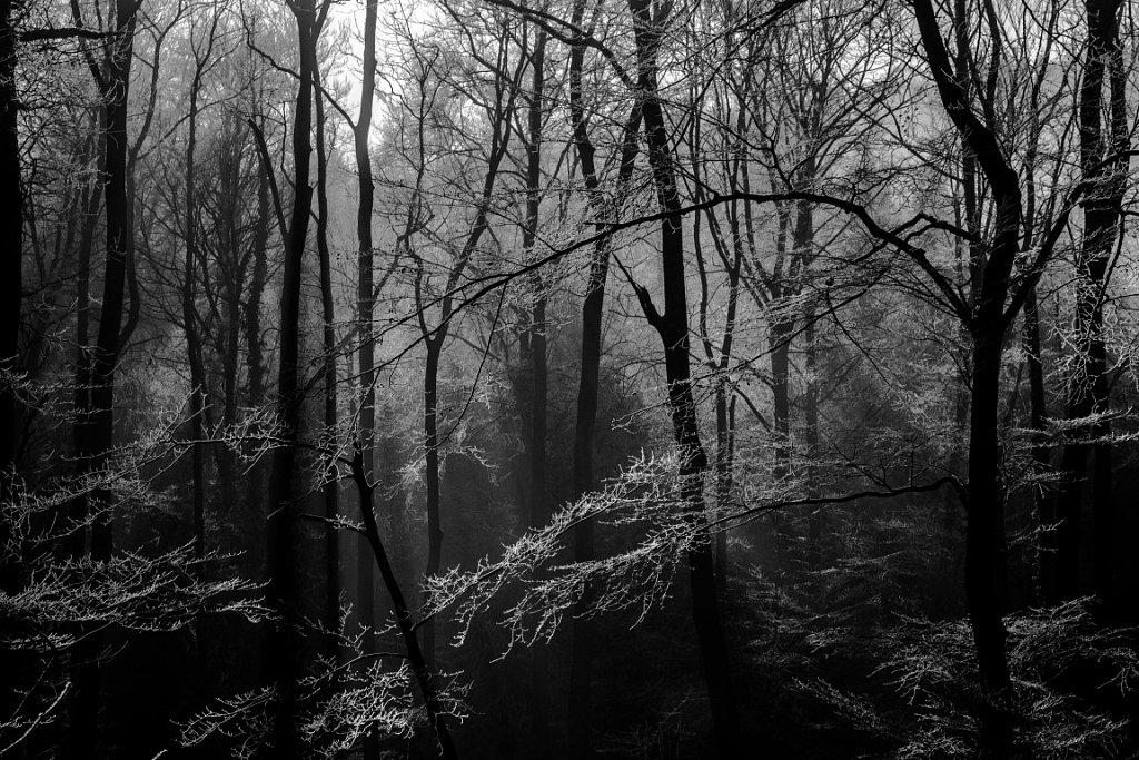 Winterwald-Medium.JPG