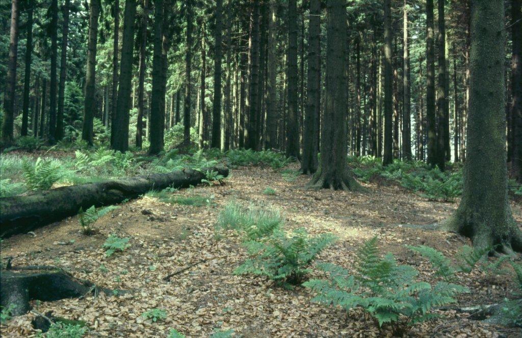 Wald-Boden-Gross.jpg