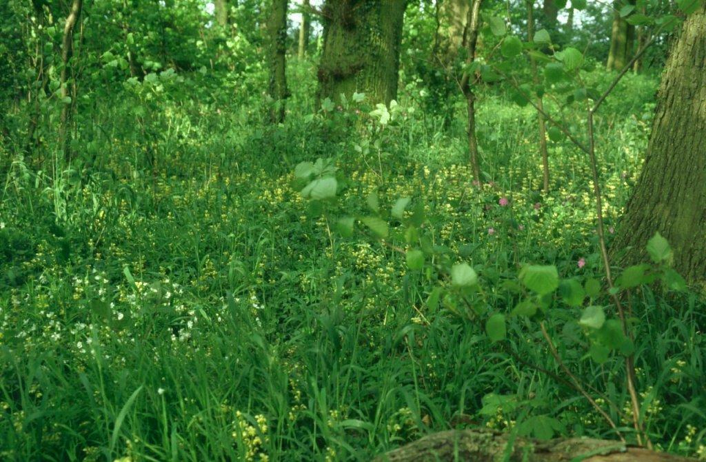 Wald-Schichten-2-Gross.jpg