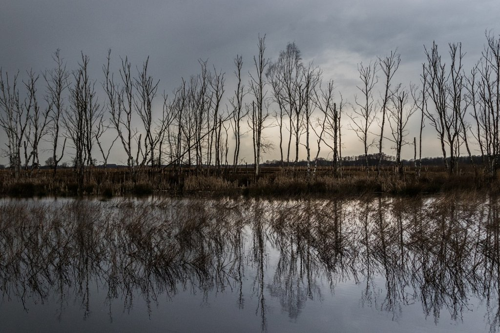 Moorteich-pond-in-the-moor.jpg